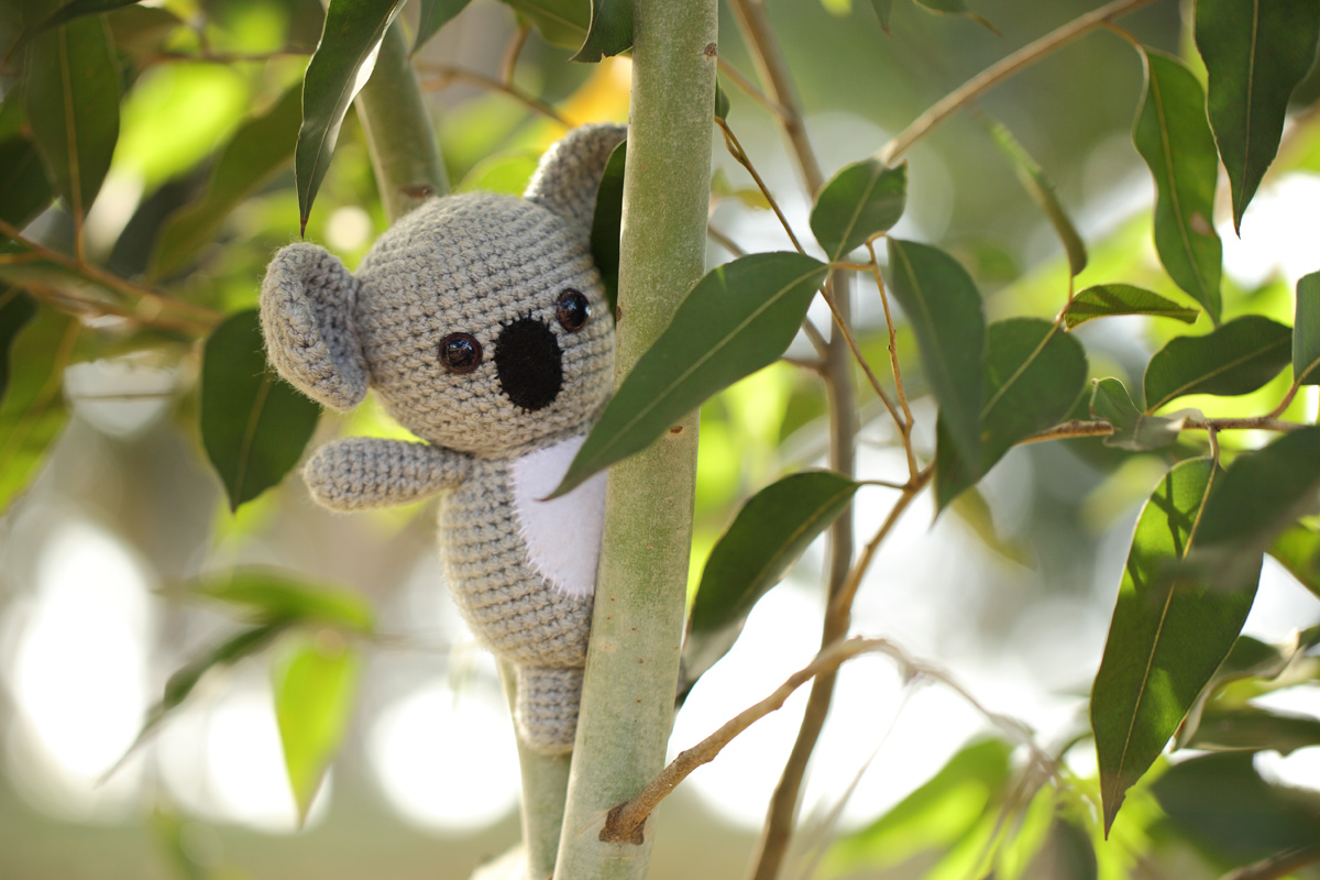 Sam the Koala
